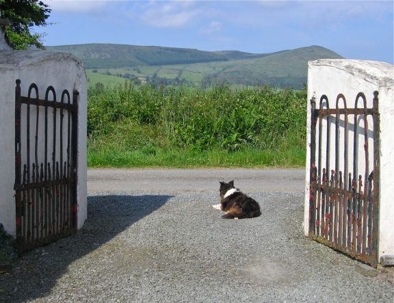 A friendly dog waits at the open gates of a dairy farm near Limerick, Ireland. Photo by: c.b.w. 2009