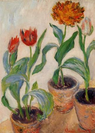 three-pots-of-tulips.jpg!Large
